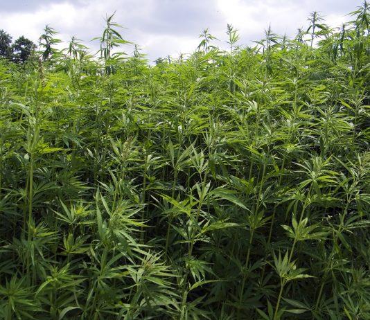 Kansas-lawmakers-introduce-medical-cannabis-legalization-bill
